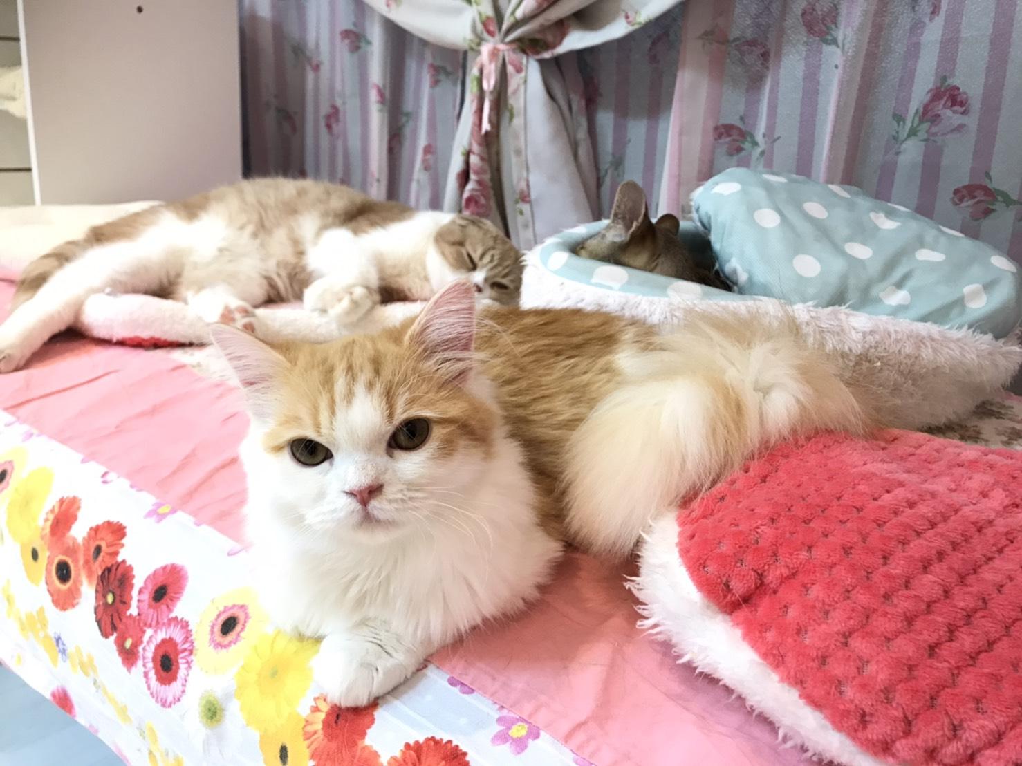 もう冬本番ですね。コロナウイルス対策をしっかりやって猫ちゃんと遊びましょう^_^