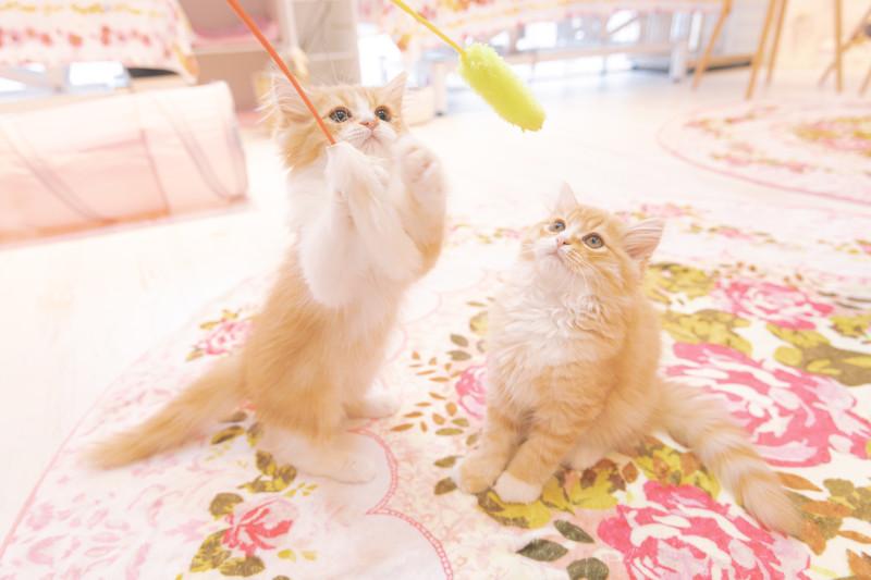 9/5(日)の混雑予想は30%、予約が2件です!(9/4 20:00現在) 横浜 元町・中華街 猫カフェ
